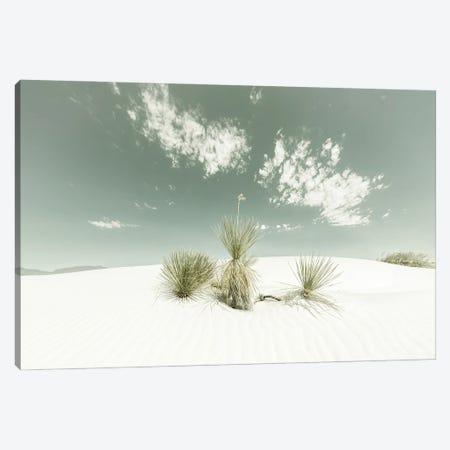 White Sands Vintage Canvas Print #MEV528} by Melanie Viola Canvas Print