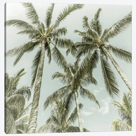 Lovely Palm Trees | Vintage Canvas Print #MEV539} by Melanie Viola Canvas Wall Art