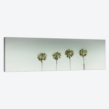 Panoramic Vintage Palm Trees Canvas Print #MEV544} by Melanie Viola Canvas Wall Art