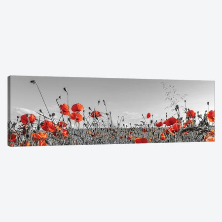 Lovely Poppy Field | Panoramic View Canvas Print #MEV567} by Melanie Viola Canvas Wall Art
