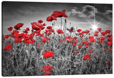 Idyllic Field Of Poppies With Sun Canvas Art Print