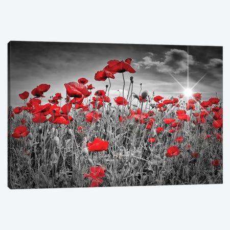 Idyllic Field Of Poppies With Sun Canvas Print #MEV56} by Melanie Viola Canvas Art