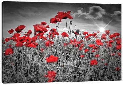 Idyllic Field Of Poppies With Sun Canvas Art Print