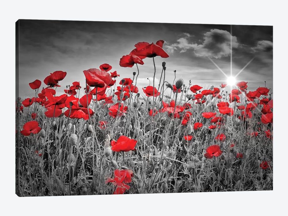 Idyllic Field Of Poppies With Sun Canvas Wall Art Melanie Viola Icanvas