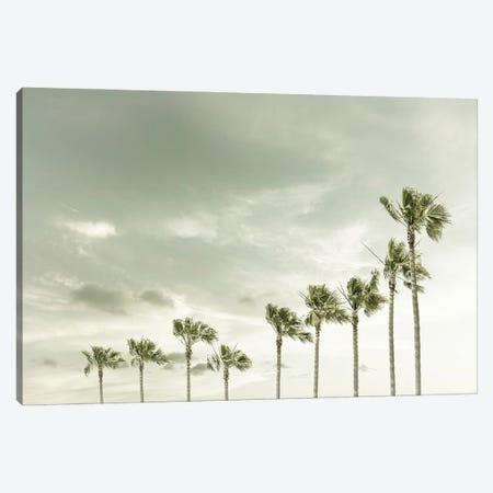 Vintage Palm Trees At The Beach Canvas Print #MEV572} by Melanie Viola Canvas Wall Art