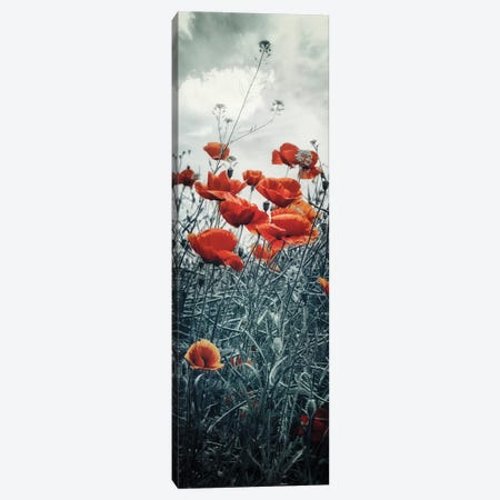 Lovely Poppy Field   Vertical Panorama Canvas Print #MEV573} by Melanie Viola Canvas Wall Art
