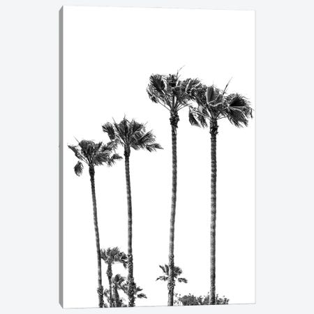 Palm Trees At The Beach | Black&White Canvas Print #MEV575} by Melanie Viola Canvas Print