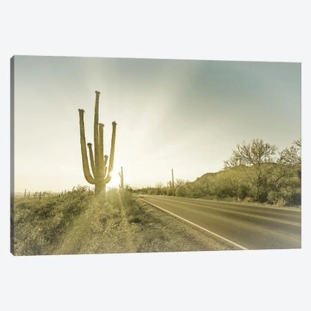 Saguaro National Park Setting Sun Canvas Print #MEV583} by Melanie Viola Art Print
