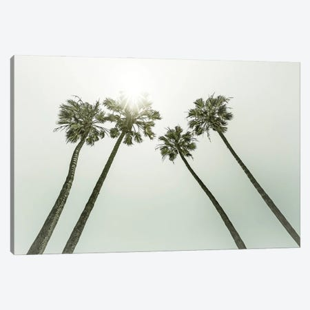Lovely VIntage Palm Trees In The Sun Canvas Print #MEV584} by Melanie Viola Canvas Art