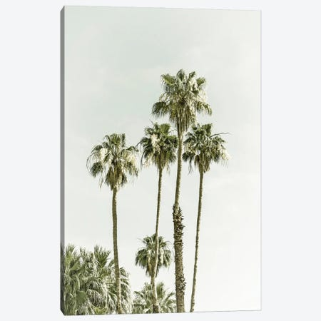 Palm Trees Summertime Canvas Print #MEV586} by Melanie Viola Canvas Art