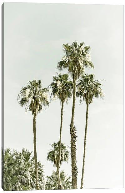 Palm Trees Summertime Canvas Art Print