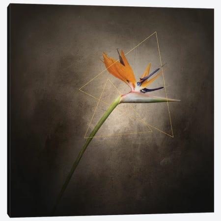 Graceful Flower - Strelitzia | Vintage Style Gold Canvas Print #MEV705} by Melanie Viola Canvas Art