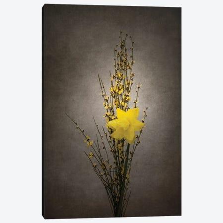 Spring Bloomer - Genista And Daffodil | Vintage Style Canvas Print #MEV708} by Melanie Viola Canvas Art Print