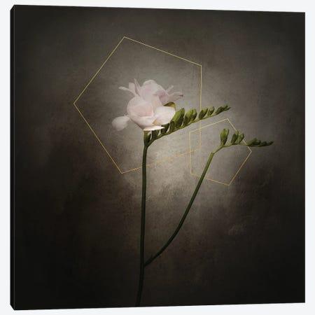 Graceful Flower - Freesia | Vintage Style Gold Canvas Print #MEV709} by Melanie Viola Art Print