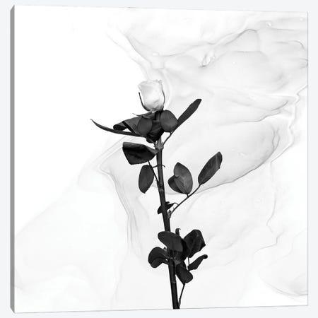 White Rose   Liquid Art Canvas Print #MEV722} by Melanie Viola Canvas Print