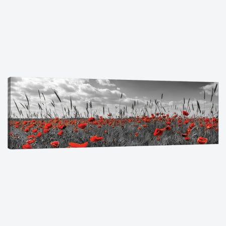Field Of Poppies In Colorkey Canvas Print #MEV775} by Melanie Viola Canvas Art Print