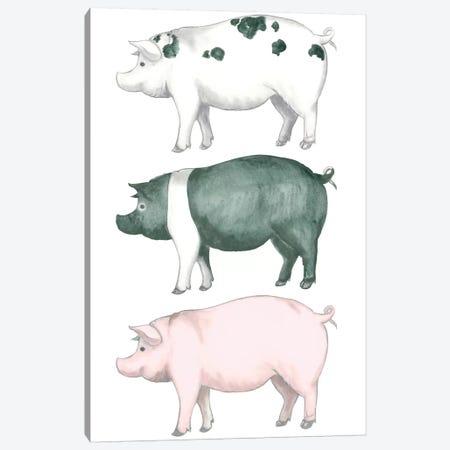 Piggy Wiggy Set Canvas Print #MEZ12} by Andi Metz Canvas Print
