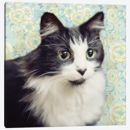 Cat on Paisley Canvas Print #MEZ3} by Andi Metz Canvas Art