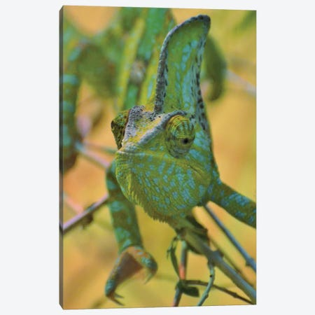 Chameleon Portrait 3-Piece Canvas #MFZ12} by Michael Fitzsimmons Canvas Print