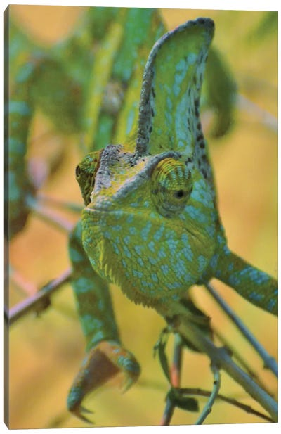 Chameleon Portrait Canvas Art Print