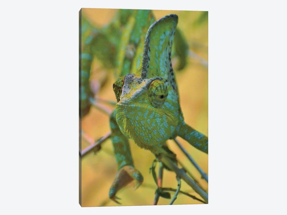 Chameleon Portrait by Michael Fitzsimmons 1-piece Art Print