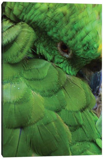 Green Parrot Portrait Canvas Art Print