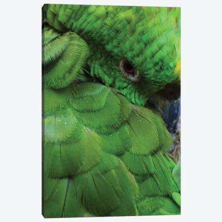 Green Parrot Portrait Canvas Print #MFZ19} by Michael Fitzsimmons Art Print