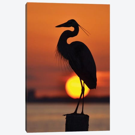 Heron And The Setting Sun Canvas Print #MFZ24} by Michael Fitzsimmons Art Print
