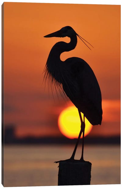 Heron And The Setting Sun Canvas Art Print