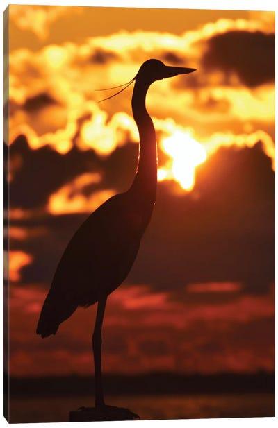 Heron At Sunset Canvas Art Print
