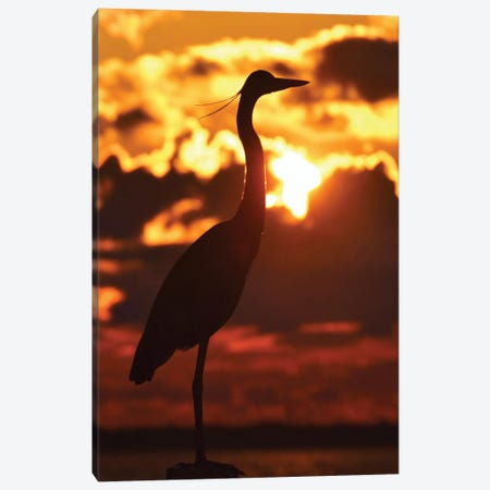 Heron At Sunset Canvas Print #MFZ25} by Michael Fitzsimmons Canvas Print