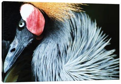 African Crane In Shadow Canvas Art Print
