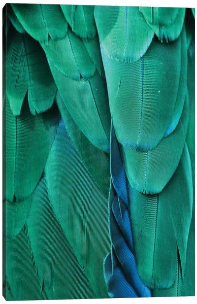 Macaw Feathers VIII Canvas Art Print