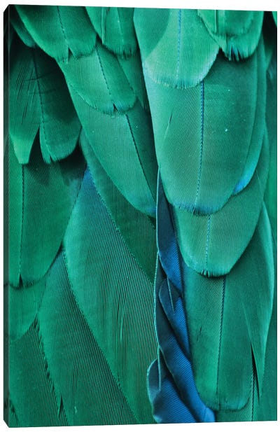 Macaw Feathers VIII Canvas Art Print