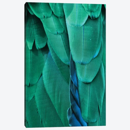Macaw Feathers VIII Canvas Print #MFZ33} by Michael Fitzsimmons Art Print