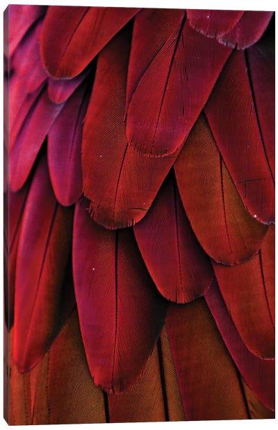 Macaw Feathers XIV Canvas Art Print