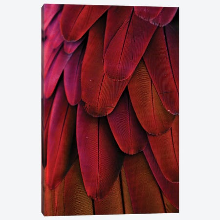 Macaw Feathers XIV Canvas Print #MFZ34} by Michael Fitzsimmons Canvas Wall Art