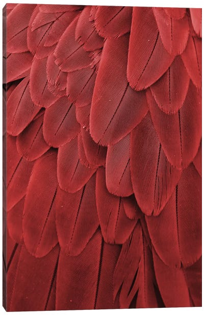 Macaw Feathers XVII Canvas Art Print
