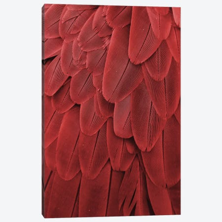 Macaw Feathers XVII Canvas Print #MFZ35} by Michael Fitzsimmons Canvas Wall Art