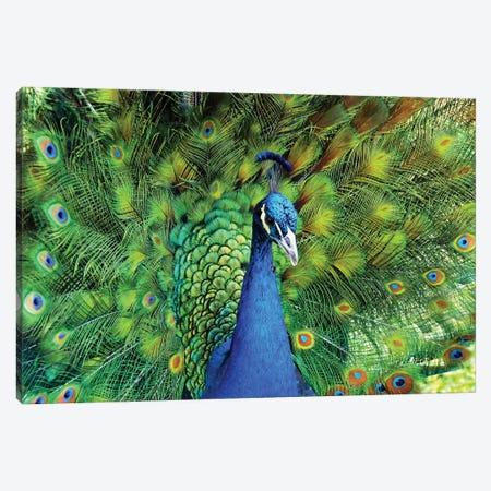 Peacock Plumage XIII Canvas Print #MFZ40} by Michael Fitzsimmons Canvas Wall Art