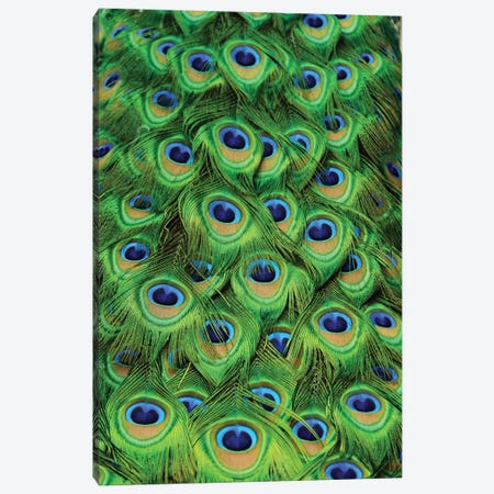 Peacock Tailfeathers Canvas Print #MFZ45} by Michael Fitzsimmons Art Print