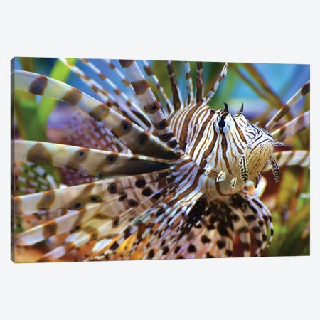 Scorpion Fish Canvas Print #MFZ52} by Michael Fitzsimmons Art Print