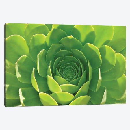Green Aloe Succulent Canvas Print #MFZ67} by Michael Fitzsimmons Art Print