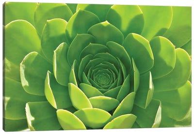 Green Aloe Succulent Canvas Art Print