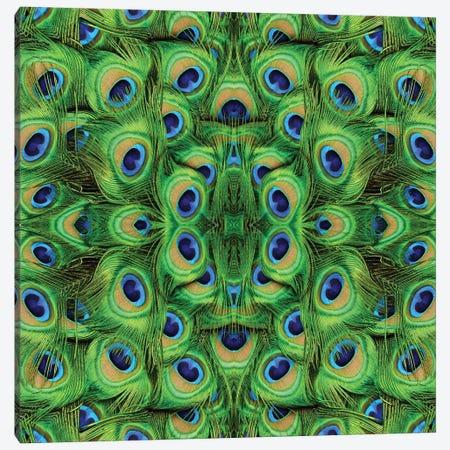 Peacock Kaleidoscope Canvas Print #MFZ72} by Michael Fitzsimmons Canvas Print