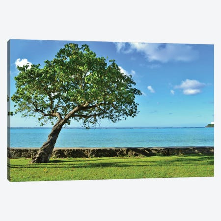 Single Tree In Front Of The Ocean Canvas Print #MFZ82} by Michael Fitzsimmons Canvas Artwork
