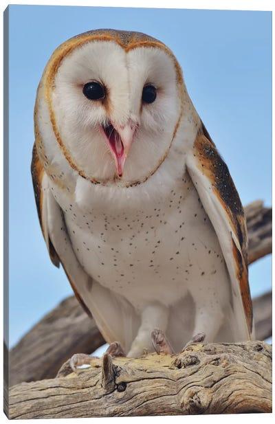 Barn Owl Smiling I Canvas Art Print