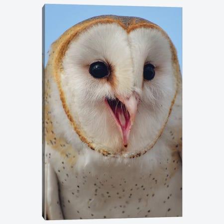 Barn Owl Smiling II Canvas Print #MFZ9} by Michael Fitzsimmons Art Print