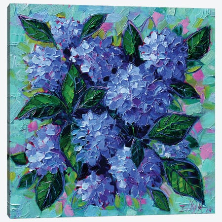 Blue Hydrangeas Canvas Print #MGE11} by Mona Edulesco Canvas Art Print