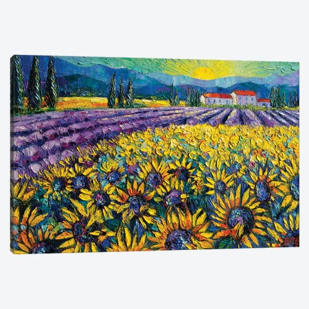 Sunflowers And Lavender Field - The Colors Of Provence Canvas Print #MGE72} by Mona Edulesco Canvas Print
